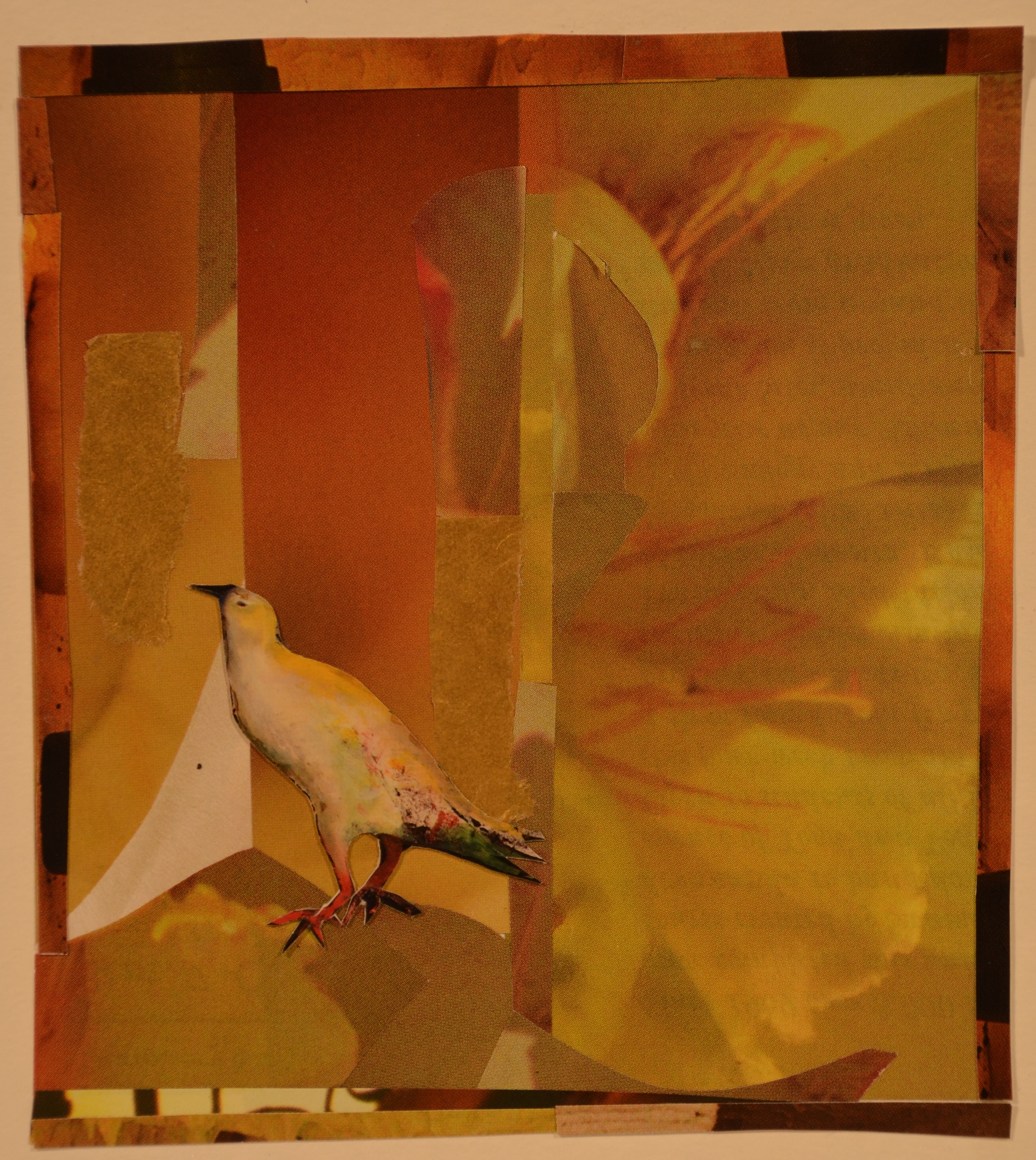 Yelllow Bird